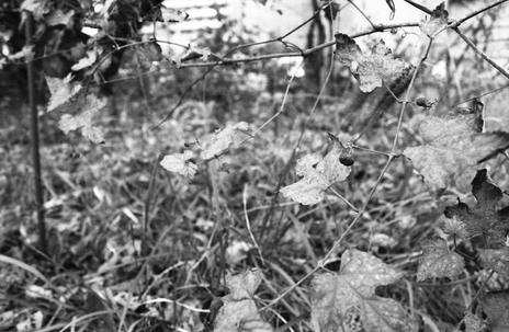 2006_12_08_nikon_f80s_067_07