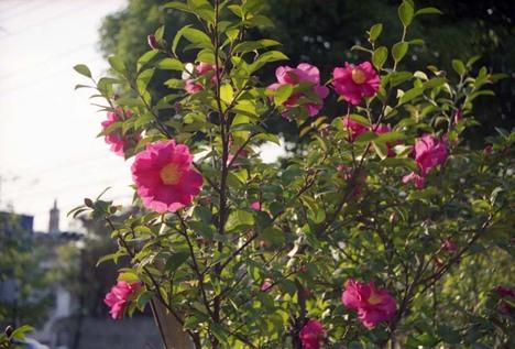 2006_12_23_minolta35_003_13