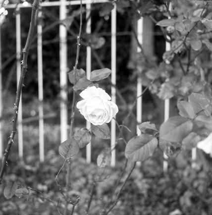 2006_12_23_minoltaflex_004_05_1