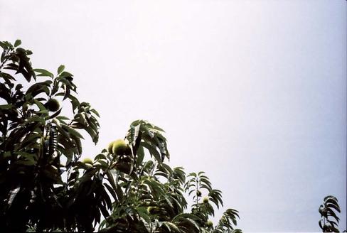 2007_08_04_olympus_trip35_009_14