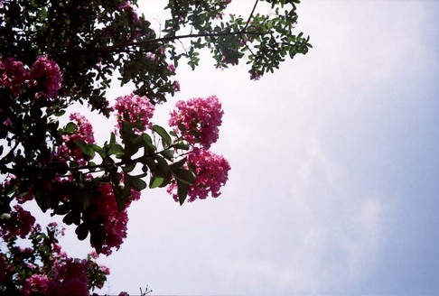2007_08_04_olympus_trip35_009_19