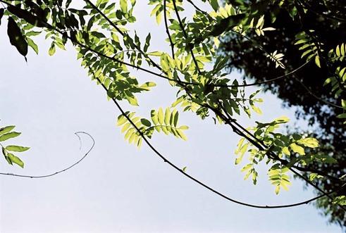 2007_09_08_olympus_m1_009_01_2