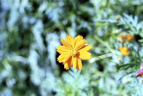 2007_09_08_olympus_m1_009_10_2
