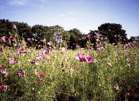 2007_09_17_canon_demi_004_18a