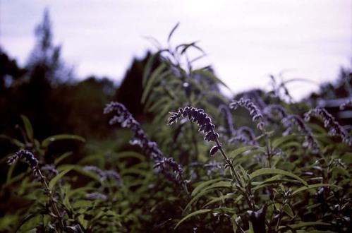 2007_09_17_nikon_f80s_131_33