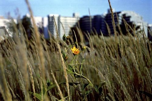 2007_09_17_nikon_f80s_132_07