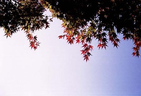 2007_11_21_olympus_trip35_011_08