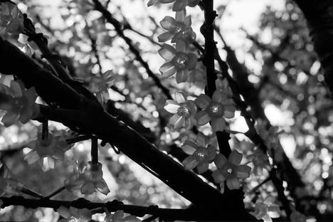 2007_11_25_olympus_m1_035_0