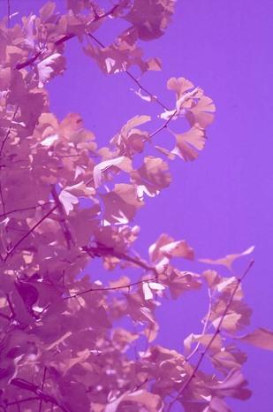 2007_12_14_nikon_f80s_154_04
