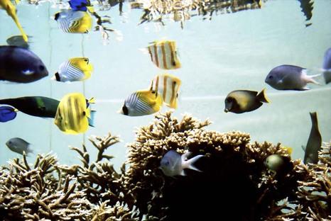 2007_12_07_nikon_f80s_150_29