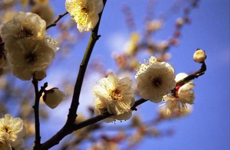2007_02_05_nikon_f80s_086_11