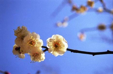2007_02_11_nikon_f80s_086_25
