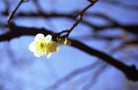 2007_02_11_nikon_f80s_086_26