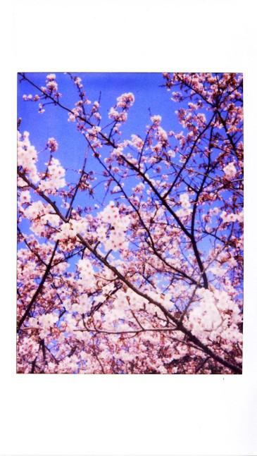 2007_02_12_joycam_011_01_1