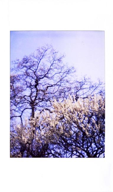 2007_02_12_joycam_011_07