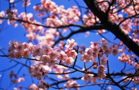2007_02_12_nikon_f80s_087_351