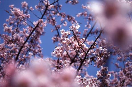 2007_02_12_nikon_f80s_088_20