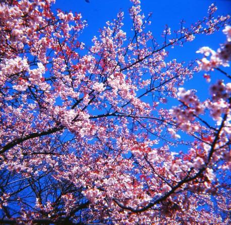 2007_02_15_fujipet_011_01