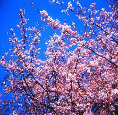 2007_02_15_fujipet_011_05
