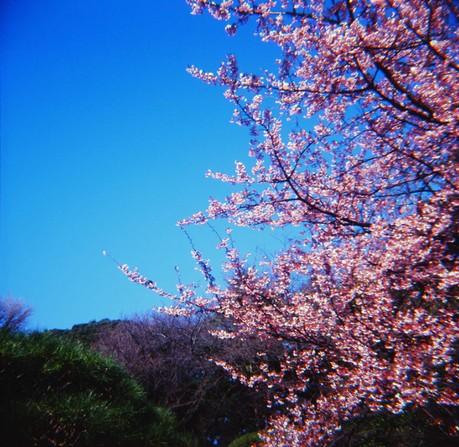 2007_02_15_fujipet_011_08