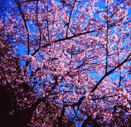 2007_02_15_fujipet_011_12