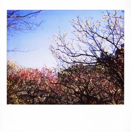 2007_02_15_polaroid_spectra_002_10_1