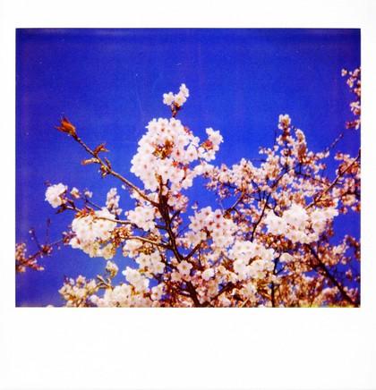 2007_02_15_polaroid_spectra_003_01_1