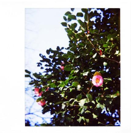 2007_02_15_polaroid_spectra_003_07