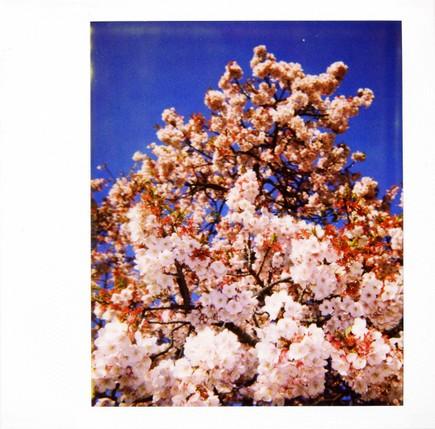 2007_02_15_polaroid_spectra_003_10