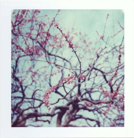 2007_02_polaroid_colorpack80_002_01