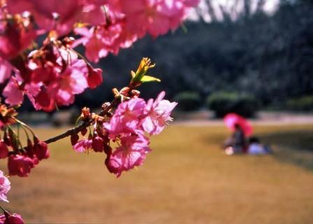 2007_03_23_samuraiz_005_25