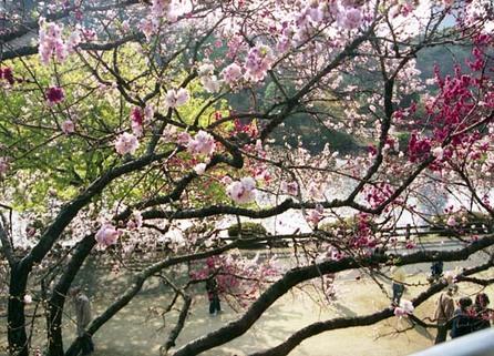 2007_03_23_samuraiz_006_0a