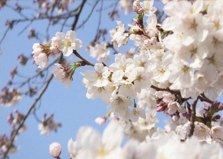 2007_03_23_samuraiz_006_12a