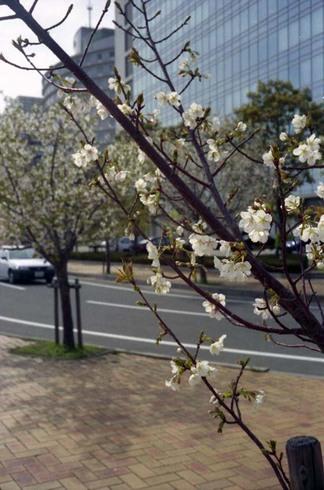 2007_04_06_ricoh_elnica_010_32