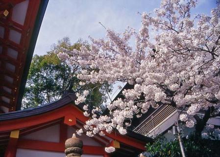 2007_04_06_samuraiz_010_08a