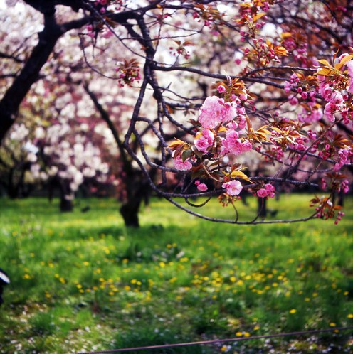 2007_04_15_minoltaflex_008_08
