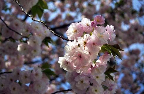 2007_04_15_nikon_f80s_097_04