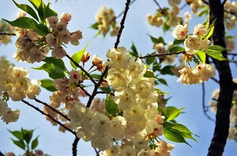2007_04_15_nikon_f80s_097_12