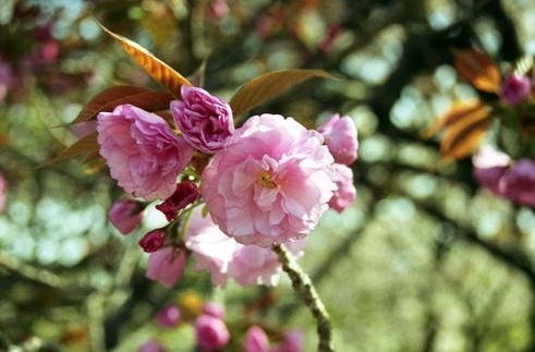 2007_04_15_nikon_f80s_097_15