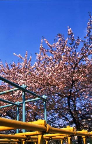 2007_04_15_nikon_f80s_099_15