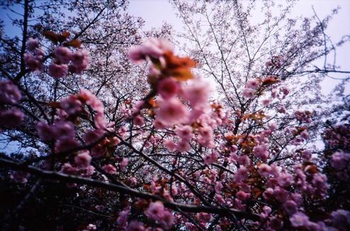 2007_04_15_ricoh_r1_026_33