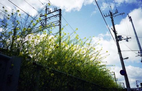 2007_04_17_ricoh_r1_027_15