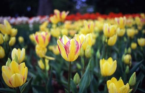 2007_04_21_olympus_m1_006_09a