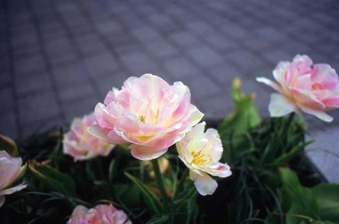 2007_04_21_olympus_m1_006_15a