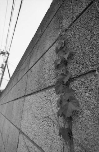 2007_04_25_nikon_f80s_103_03