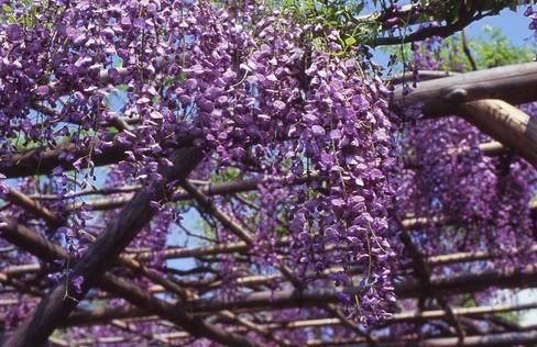 2007_04_26_olympus_m1_006_18a