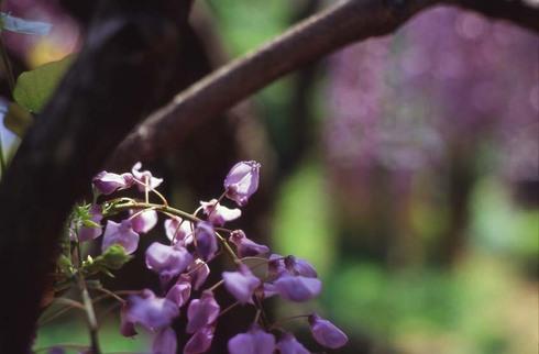 2007_04_26_olympus_m1_006_23a