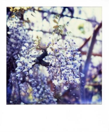 2007_04_26_polaroid_sx70_001_03_1
