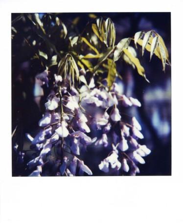 2007_04_26_polaroid_sx70_001_06