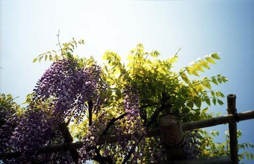 2007_04_26_ricoh_r1_029_11